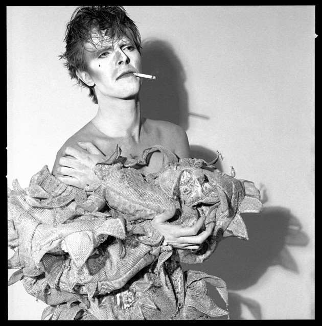 =bowie